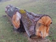 der ca. 200 Jahre alte Eichenstamm aus Niederbayern